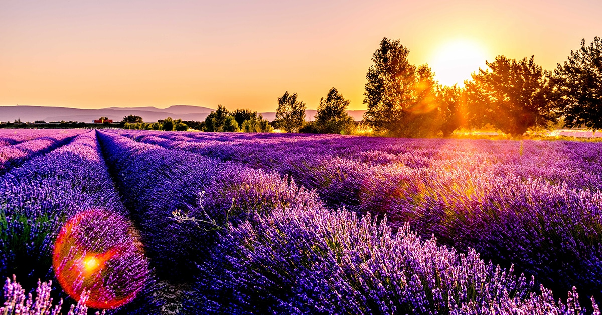 Provence in the Spring